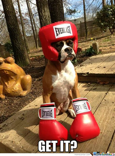 Old Boxer Meme - cause he s a boxer by cuteasfuck meme center