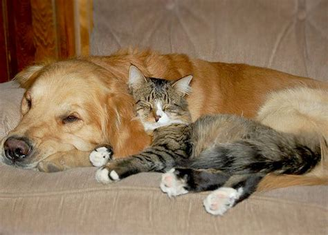 two dogs and a cat can cats and dogs live peaceably together