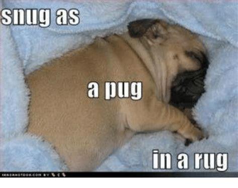 pugs rugs 25 best memes about rugs rugs memes