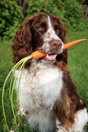 vegetables i can feed my dog feed my vegetables is