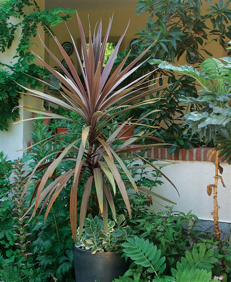 plants that grow in complete darkness designing with spiky plants finegardening