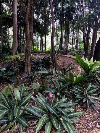 Hotels Near Botanical Gardens Brisbane City Botanic Gardens Brisbane Australia Top Tips Before You Go With Photos Tripadvisor