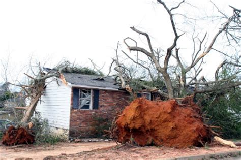 home insurance and fallen trees fallen tree damage what will your home insurance cover