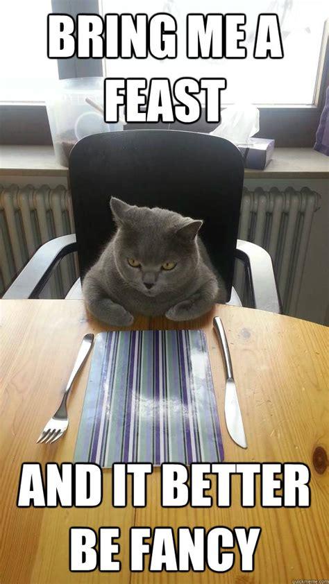 Fancy Feast Meme - bring me a feast and it better be fancy hungry cat