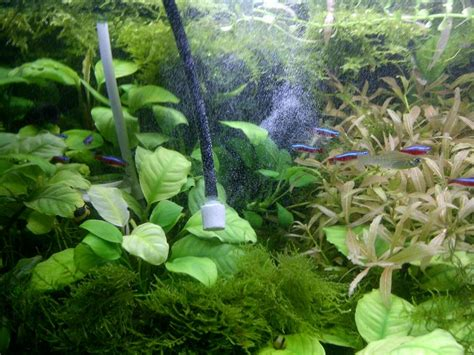 aquascape how to how to adding co2 into the aquascape aquascaper