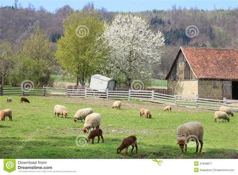 La Grange Des Pères Prix by Ferme Avec Les Moutons Et La Grange Photo Stock Image