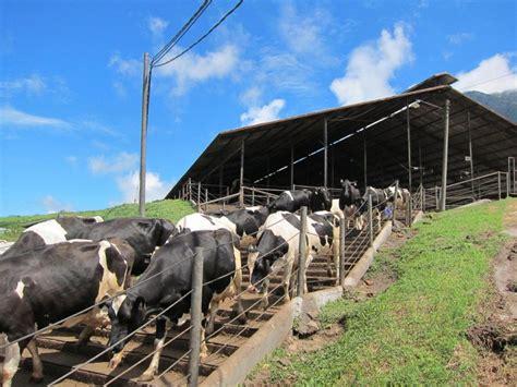 Bibit Sapi Perah Di Indonesia peternakan sapi perah terbesar dan termodern se asia