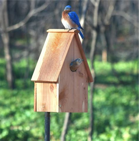 Backyard Bird Watcher by Backyard Bird The Right Furniture Makes All The