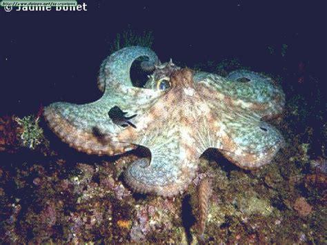 imagenes de animales moluscos fotos de moluscos