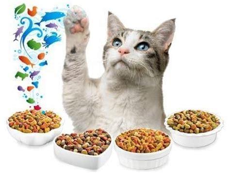 alimenti per gattini alimentazione gattini cibo gatti alimentazioni gattini