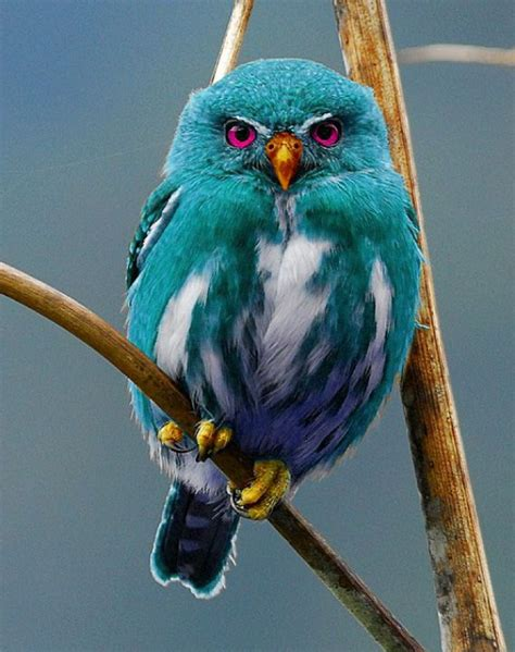 what color are owls teal owl