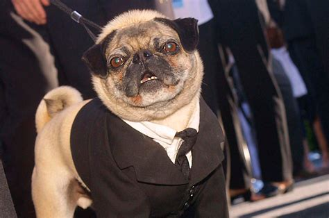 frank the pug from in black 10 brilliant animal tv where are they now nme