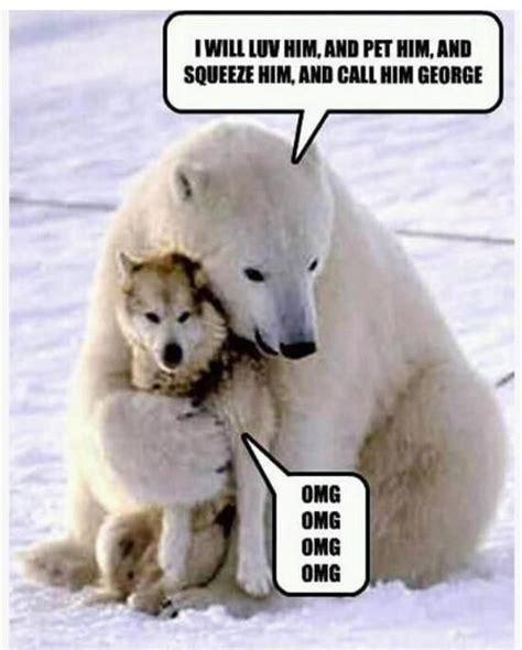 polar bear hugging wolf funny animals pinterest