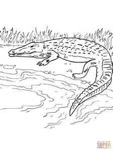 Crocodile On The River Bank Coloring Online  Super sketch template