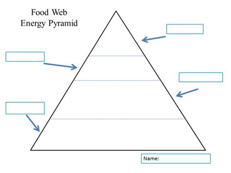 food chain template cards food web energy pyramid template ag biology ecology