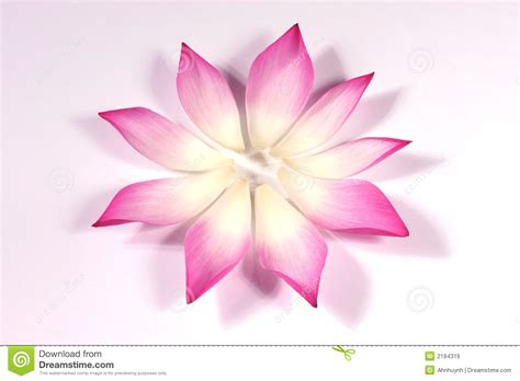 lotus flower petals lotus petals with its bud royalty free stock images