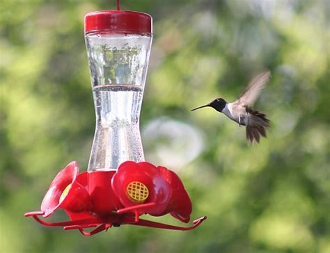 best 28 when do you put hummingbird feeders out best