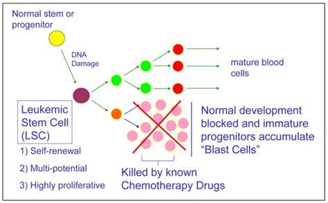 stem cell diagram leukemic stem cell reproduction diagram