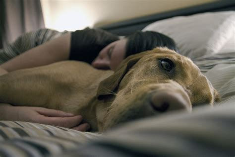 affectionate dogs the 10 most affectionate breeds