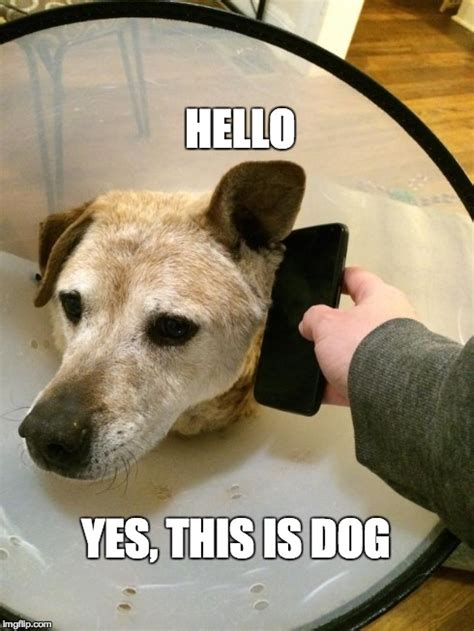 This Is Dog Meme - this is dog cone of shame imgflip