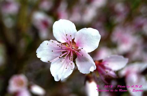 imágenes flores japonesas el iris de mi objetivo primavera flores 2
