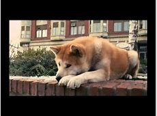 Hachiko A Dog's Story Music Video From Movie - YouTube Hachiko Movie