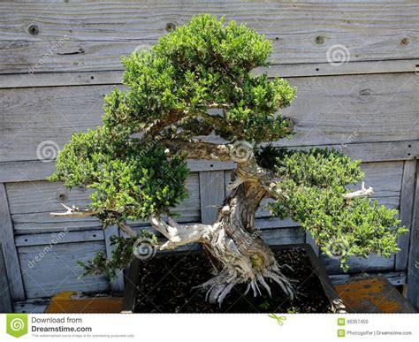 giardini bonsai giardino zen e bonsai giardino zen bonsaiclub