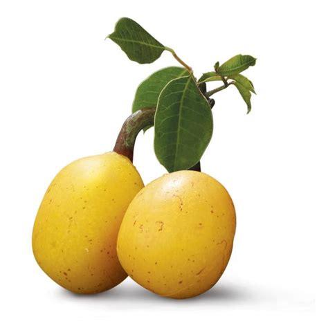 fruity v the fabulous marula the slowvelder
