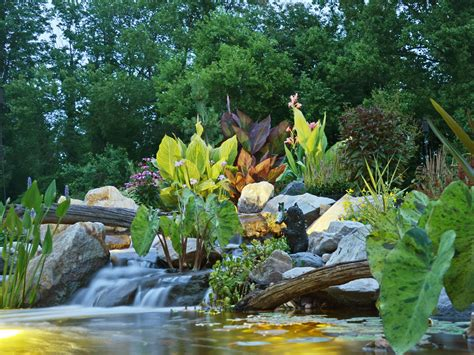is a backyard pond an ecosystem ponds water garden pictures turpin landscaping