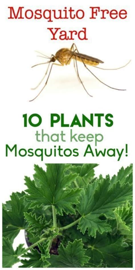 best way to keep mosquitoes away from backyard 17 best images about garden stuff info on pinterest