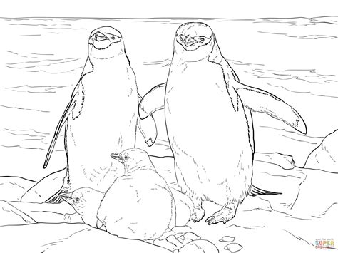 african penguin coloring page african penguin coloring page coloring pages