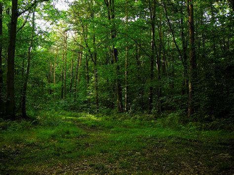 background hutan hutan gallery