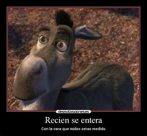 imagenes graciosos de burros frases del burro de shrek 1 imagui