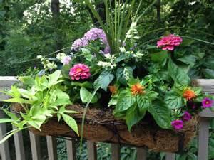 Garden Windows Home Depot Decor Plant A Summer Window Box Garden Club