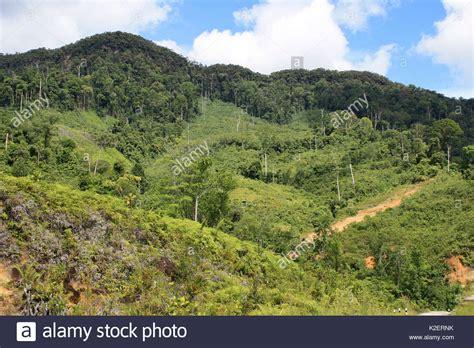 Borneo Kalimantan kalimantan tree stock photos kalimantan tree stock