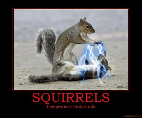 Dead Squirrel Meme - 1000 images about star wars squirrels on pinterest