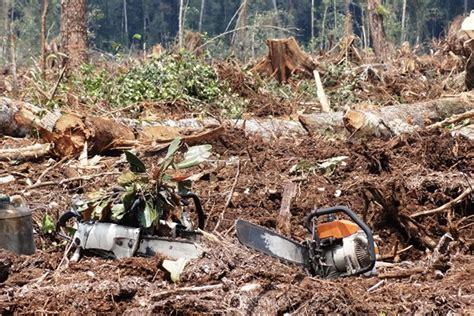 Gergaji Mesin Tebang Kayu terlibat korupsi tebang hutan alam namun tetap