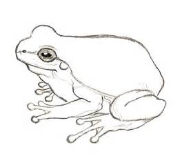 rampant eclecticism 365 drawings frog 6 365