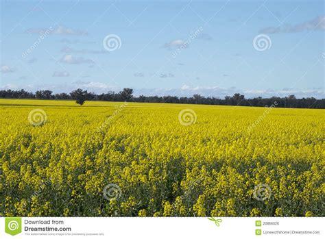 Landscape Photos Royalty Free Landscape Royalty Free Stock Image Image 20866026