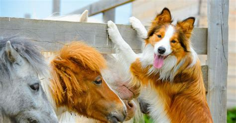 easiest breeds to easy to dogs breeds center petpremium
