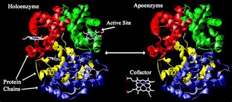 biokatalis adalah kerja enzim dan fungsi enzim dalam tubuh