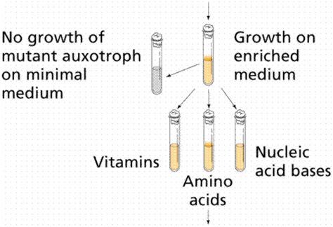 freeman utated lon capa protein synthesis