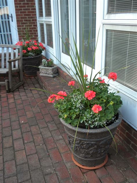 panoply plan now annual flower container ideas