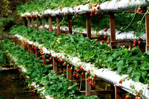 Backyard Picnic Games Genting Strawberry Leisure Farm Genting Highlands