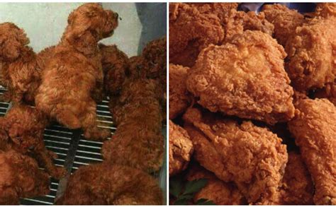 puppies or fried chicken quiz labradoodle or fried chicken barkpost