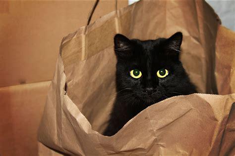 cat   bag hookie hiding   paper bag press   view flickr
