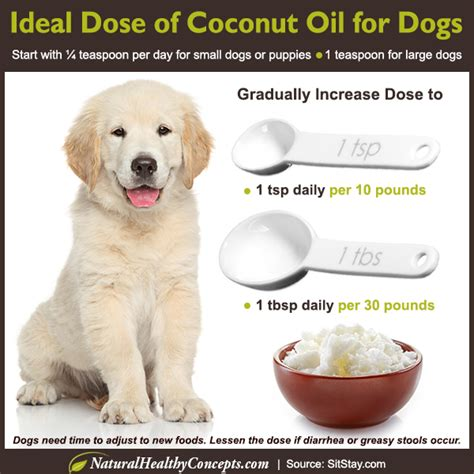 coconut bad for dogs 15 science proven evidence based uses for coconut that will change your s