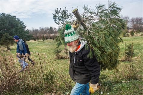 grady s christmas tree farm marks 61 years in business