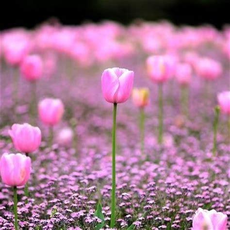 il linguaggio segreto dei fiori riassunto never say book recensione il linguaggio segreto dei fiori