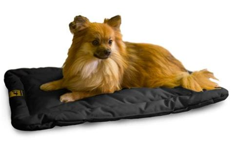unchewable dog bed indestructible dog beds webnuggetz com